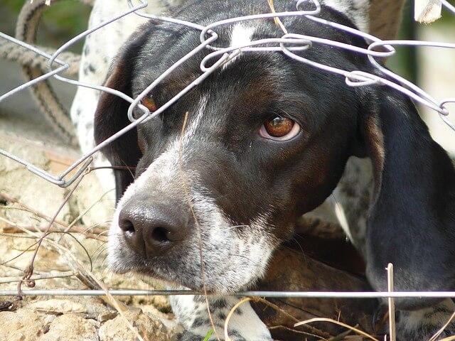 Los perros tambén son utilizados para el testeo de animales en la cosmetica