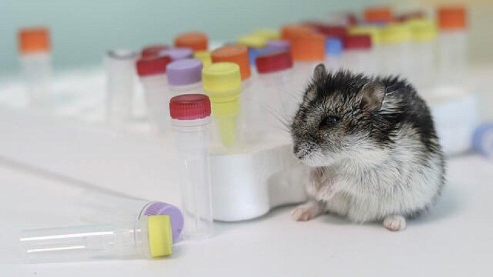 Evitar las marcas que experimentan en animales ayuda al desarrollo sostenible