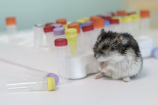 Experimentos con animales en un laboratorio para probar productos